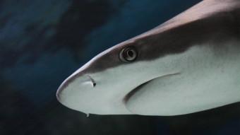 10 grunde til hvorfor hajer er JAWsome