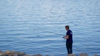 Fang hornfisk