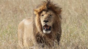 Rejs til Tanzania og Zanzibar med Den Blå Planet