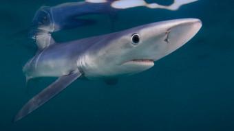 Top 4: Hurtigste hajer