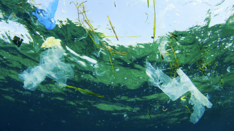 Det har Plastic Change fokus på i 2016