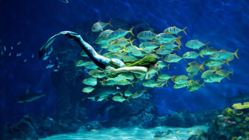 Havfruen - fakta om myten
