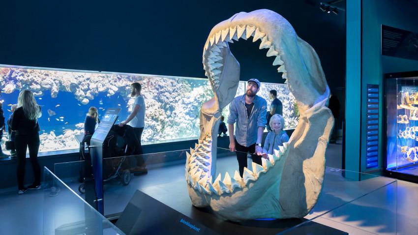 Megalodonhajen - nogle kalder den Shark-zilla