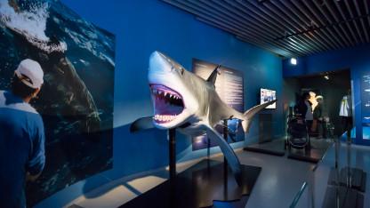 De moderne hajers oprindelse