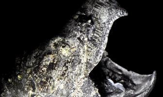 Alligatorskildpadde