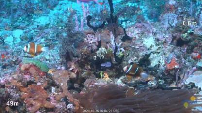 Nyt koralrev opdaget ud for Australiens kyst