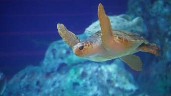 Havskildpadden skal hedde...