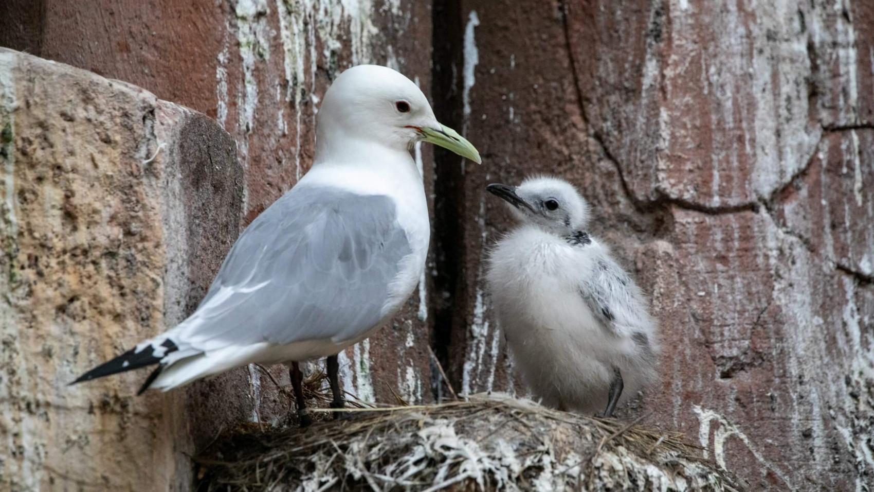 En glædelig overraskelse i Fuglefjeldet