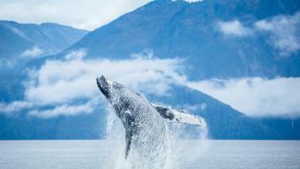 Blåt udvalg af National Geographics fotokonkurrence 2014