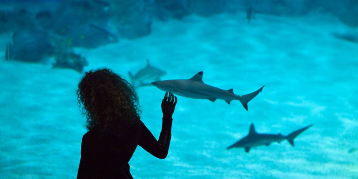Get up close and personal with our sharks over Easter