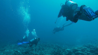 Hvilken havslangeart har vi fanget?