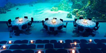 Få Nordeuropas största akvarium helt för er själva