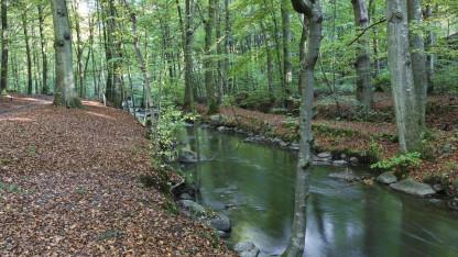 FNs Verdenshavenes dag: Giv vandet tilbage til naturen