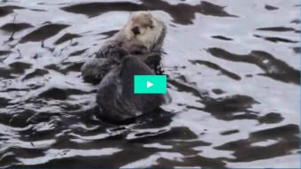 Havoddere på Den Blå Planet