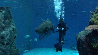Vild video: Kæmpefisk på operationsbordet