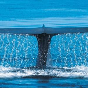 Foredrag: Kom i felten med hval-biologen