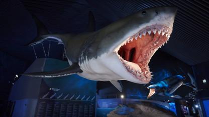 Den største haj nogensinde var måske endnu større