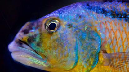 Hvordan taler dyr under vand?