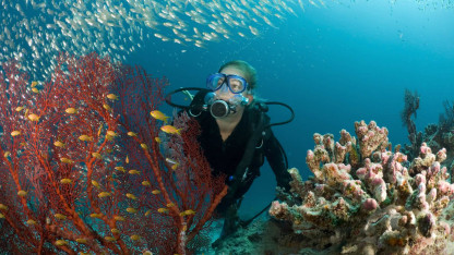 9 ting du bør vide om koralrev