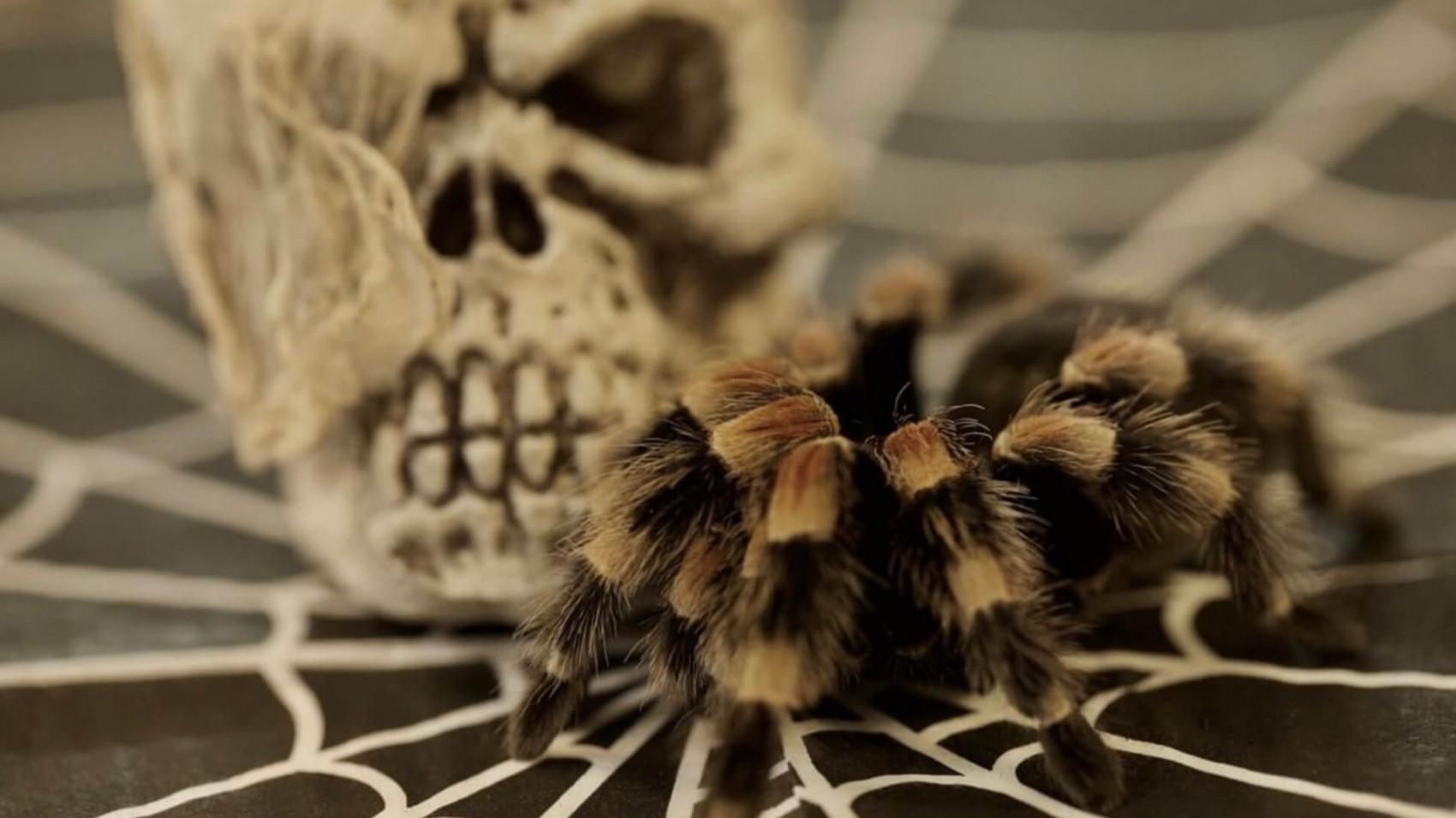 Halloween: Er kryb hyggeligt eller uhyggeligt?