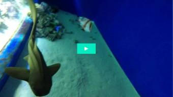 En sjælden almindelig haj