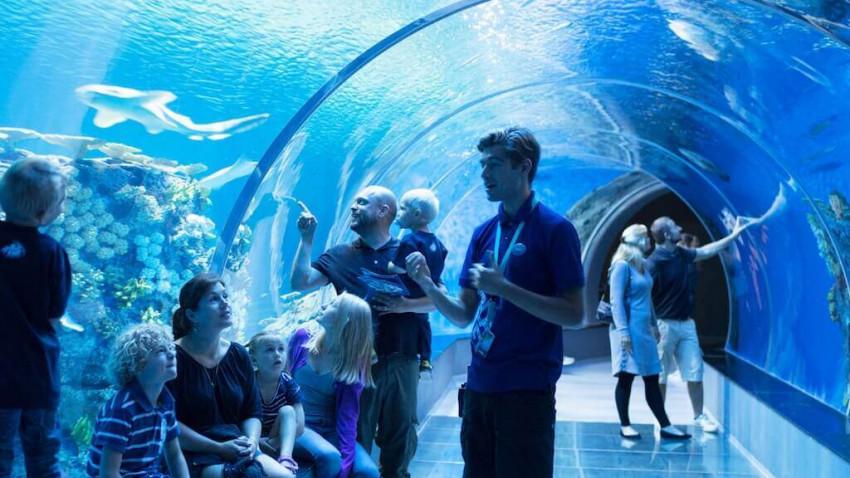 Nordeuropas största akvarium med fantastiska upplevelser