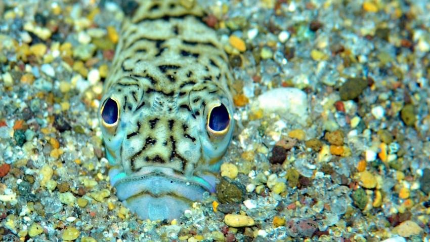 Danmarks giftigste akvarium