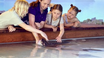 Up close and personal with sharks and stingrays!