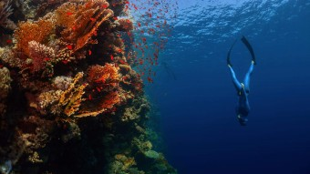 Kom ned i dybet med én af Danmarks bedste fridykkere