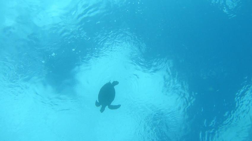 En verden uden havskildpadder