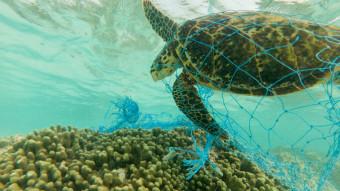5 trusler mod havskildpadder