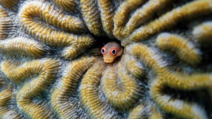 Koraløernes skønhed