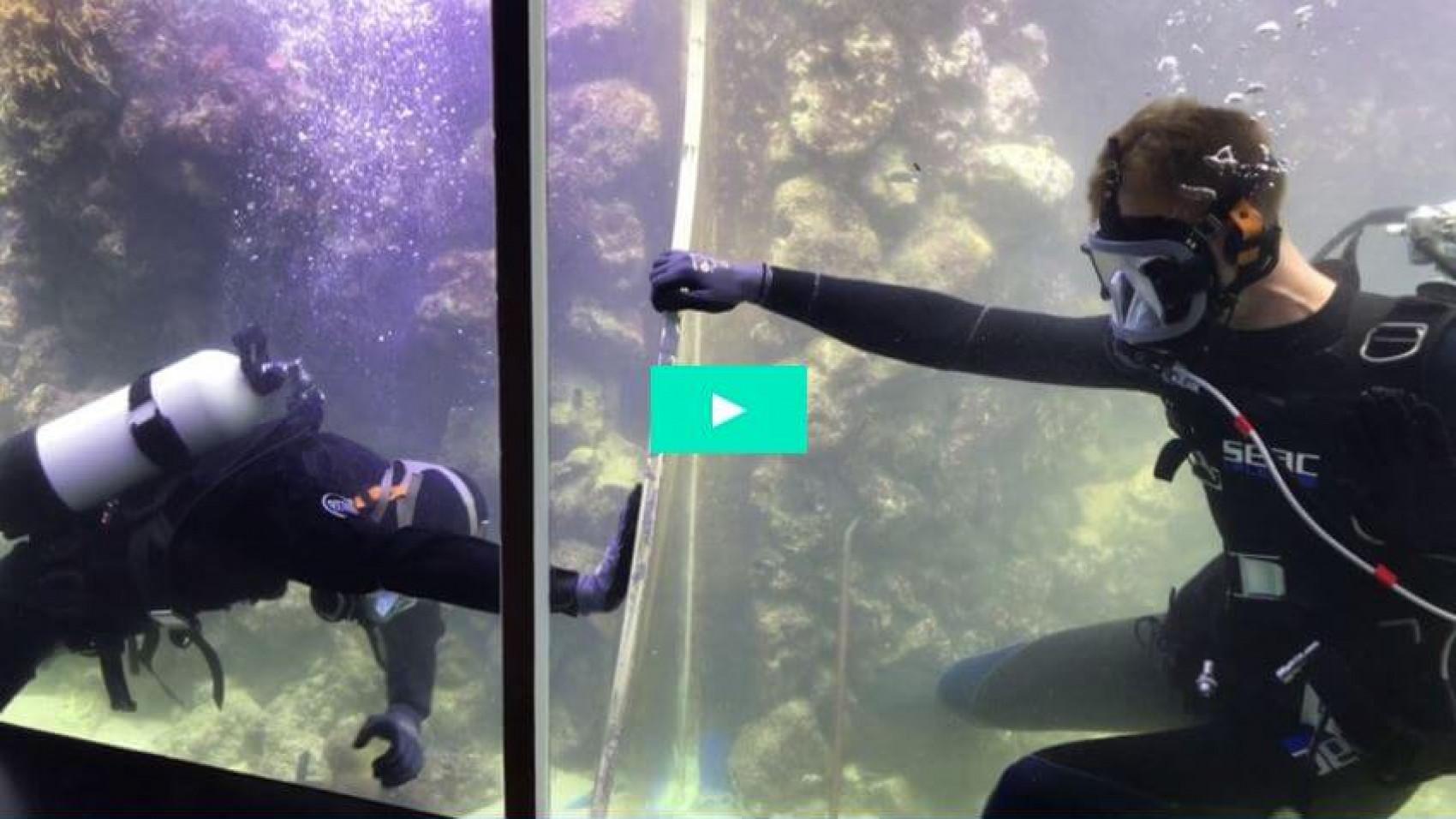Hærværk i koralrevet