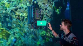 Hammerhajerne har ridset Ocean-ruden. Nu pudses den med en undervandsrobot.