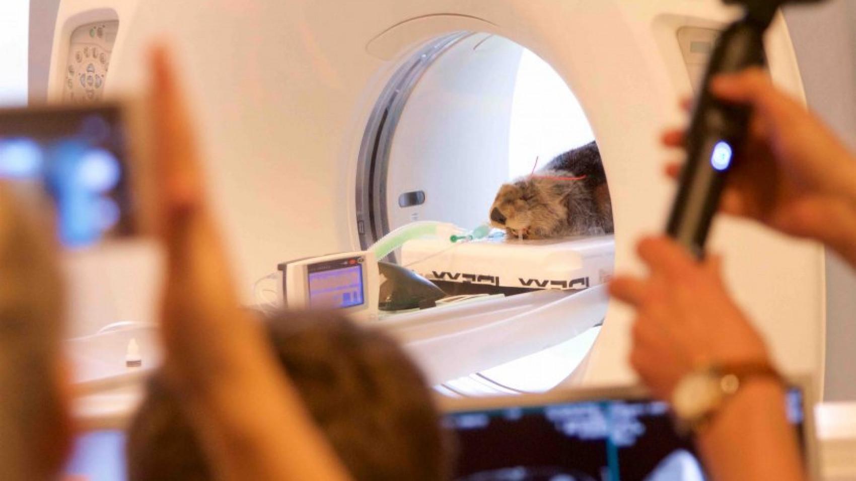 Havodder til CT-scanning