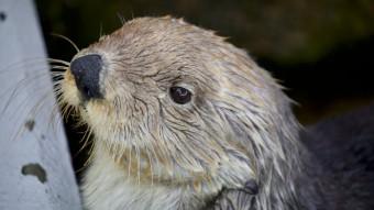 Kvikke havoddere passes af kvikke dyrepassere