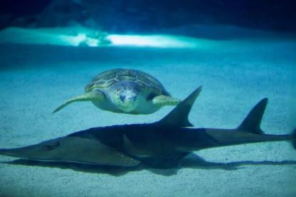 Närkontakt med en havssköldpadda