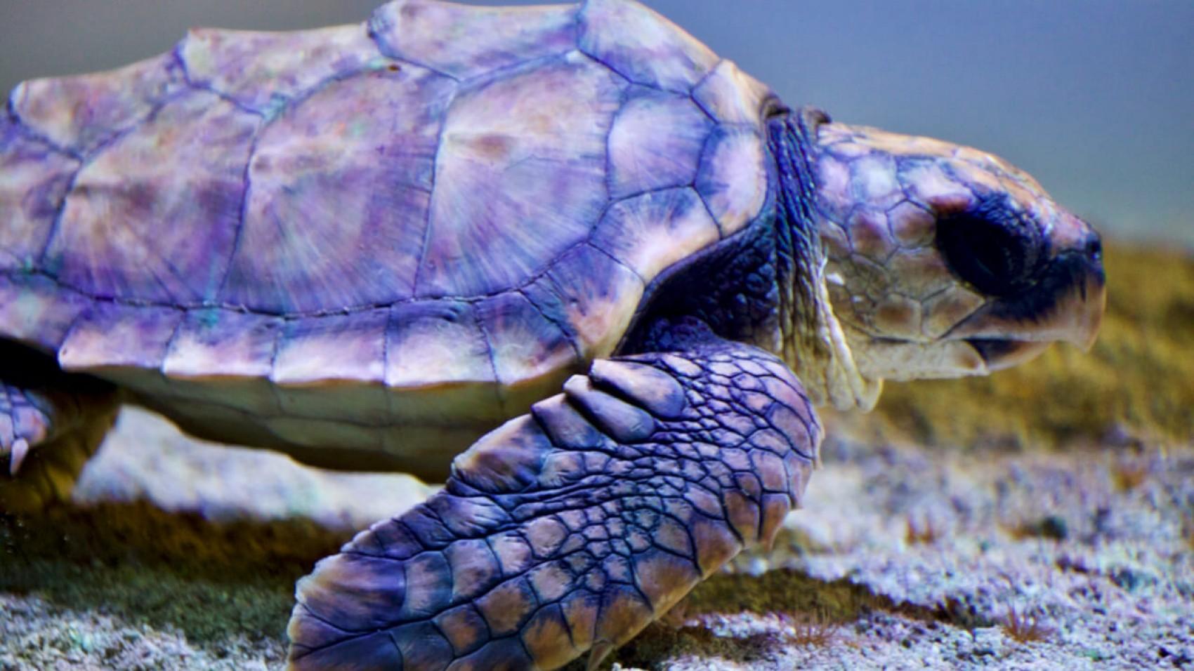 Havskildpadden har fået det bedre