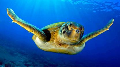 Havskildpadder og den indbyggede GPS