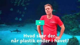 Hvad sker der når plastik ender i havet?