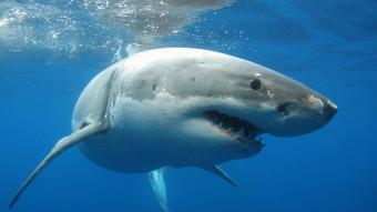 En historie om frygt for hajer