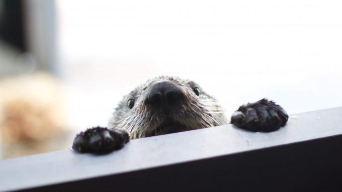 Brusebad til pelsede pattedyr