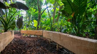 Ny Junglesti på Den Blå Planet