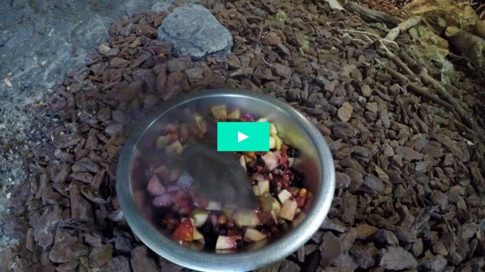Kan flagermus være vegetarer?