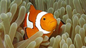 Er søanemonen plante eller dyr?