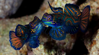 Er det ikke dumt, at koralfisk er så flotte?