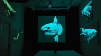 Foredrag: Kan kunst redde naturen?