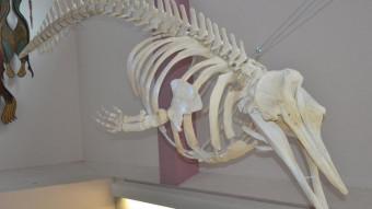 Mystisk hvaldød fører til ny art