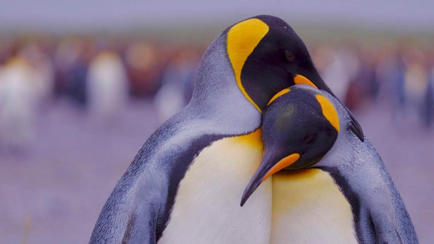 Antarktis – verdens dybfryser og pingvinernes rige