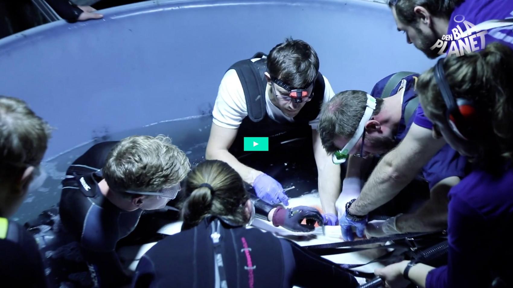 Stor rokkeoperation på Den Blå Planet
